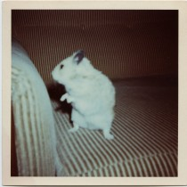 cropped-hamster013_3.jpg
